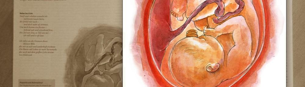 Child in the womb - Kind in Gebärmutter