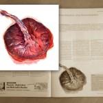 placenta - Plazenta